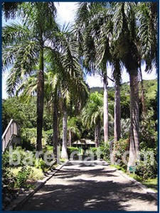 J.R. O'Neal Botanic Gardens in the British Virgin Islands is a top destination during a bareboat vacation